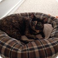 Adopt A Pet :: Ester - Denton, TX