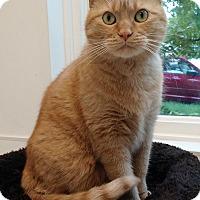 Adopt A Pet :: Zoltar - Chicago, IL