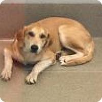 Adopt A Pet :: Zoe 3236 - Columbus, GA
