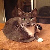 Adopt A Pet :: Silver [CP] - Oakland, CA