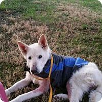 Adopt A Pet :: Trooper - Winston-Salem, NC