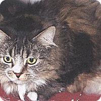 Adopt A Pet :: Maisy - El Cajon, CA