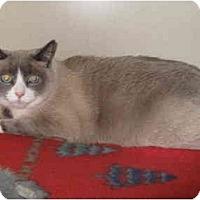 Adopt A Pet :: Kailin - Mesa, AZ