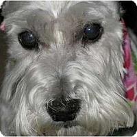 Adopt A Pet :: Watson - Madison, WI