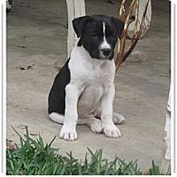 Adopt A Pet :: Lloyd - Santa Monica, CA