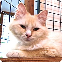Adopt A Pet :: Romeo - Davis, CA