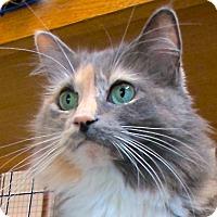 Adopt A Pet :: Kalinda - Davis, CA