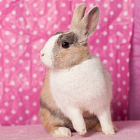 Other/Unknown Mix for adoption in Los Angeles, California - Alexia