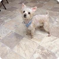 Adopt A Pet :: Gizzmo - N. Babylon, NY