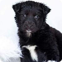 Adopt A Pet :: Riggs 💚 ADOPTED! - Saratoga Springs, NY