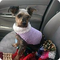 Adopt A Pet :: Daisy - Adoption Pending! - Farmington Hills, MI