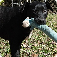 Adopt A Pet :: Tucker - Kittery, ME