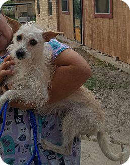 Terrier (Unknown Type, Medium) Mix Dog for adoption in Brownsville, Texas - Juno