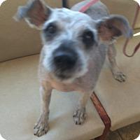 Adopt A Pet :: Kenny - Oak Ridge, NJ