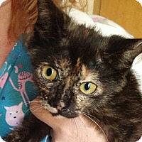 Adopt A Pet :: Dandylion - New Smyrna Beach, FL