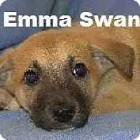 Adopt A Pet :: Emma Swann - Woodstock, GA