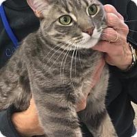 Adopt A Pet :: Ron Fleasley - Encinitas, CA