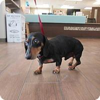 Adopt A Pet :: Jack - Humble, TX