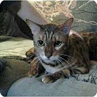 Adopt A Pet :: Jagger - Lantana, FL