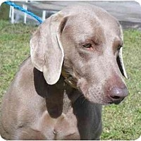 Adopt A Pet :: Hope  **ADOPTED** - Eustis, FL