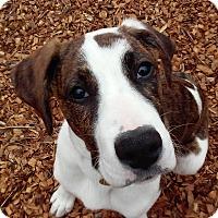 Adopt A Pet :: Clancy - Richmond, VA