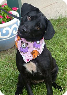 Labrador Retriever/Terrier (Unknown Type, Medium) Mix Dog for adoption in Fayetteville, North Carolina - Winnie