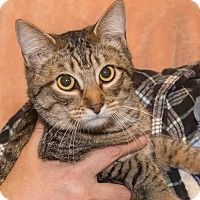 Adopt A Pet :: Mars - Elmwood Park, NJ