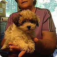 Adopt A Pet :: Mopsy - Hazard, KY