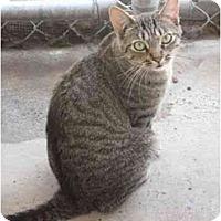 Adopt A Pet :: Sebastian - El Cajon, CA