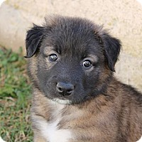 Adopt A Pet :: Tom - La Habra Heights, CA