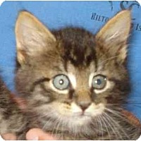 Adopt A Pet :: Pumpernickel - Richmond, VA