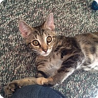 Adopt A Pet :: Lovey - Chesterfield Township, MI