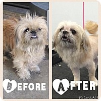 Adopt A Pet :: Kylie - Sacramento, CA