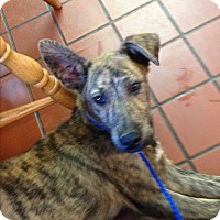 Adopt A Pet :: *Jake - PENDING - Westport, CT