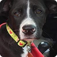Adopt A Pet :: Dill - Marlton, NJ