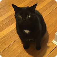 Domestic Shorthair Cat for adoption in Cleveland, Ohio - Lucky