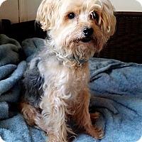 Adopt A Pet :: Patrick - Lawrenceville, GA