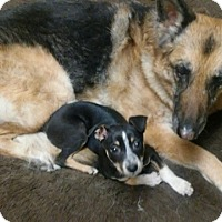 Adopt A Pet :: GEORGIE *adoption pending* - Nampa, ID