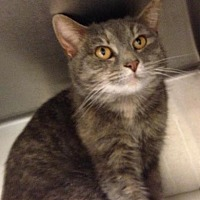 Adopt A Pet :: Tivvy - Anderson, IN