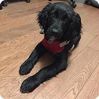 Adopt A Pet :: Nova - Westport, CT