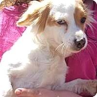Adopt A Pet :: Georgia - Boulder, CO