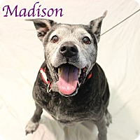 Adopt A Pet :: Madison - Bradenton, FL
