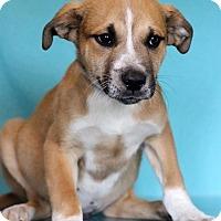 Adopt A Pet :: Gene - Waldorf, MD