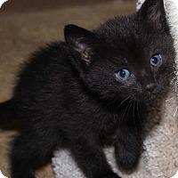 Adopt A Pet :: Nick - Thousand Oaks, CA