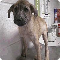 Adopt A Pet :: Titus - Aurora, CO