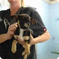 Adopt A Pet :: URGENT on 5/25 SAN BERNARDINO - San Bernardino, CA