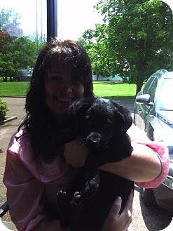 Labrador Retriever Mix Dog for adoption in Southampton, Pennsylvania - Scarlet Archer