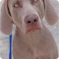 Adopt A Pet :: Casey *Adoption Pending* - Eustis, FL