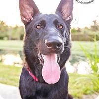 Adopt A Pet :: Mystic - Ormond Beach, FL