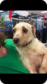Terrier (Unknown Type, Medium) Mix Dog for adoption in Fresno, California - Winnie